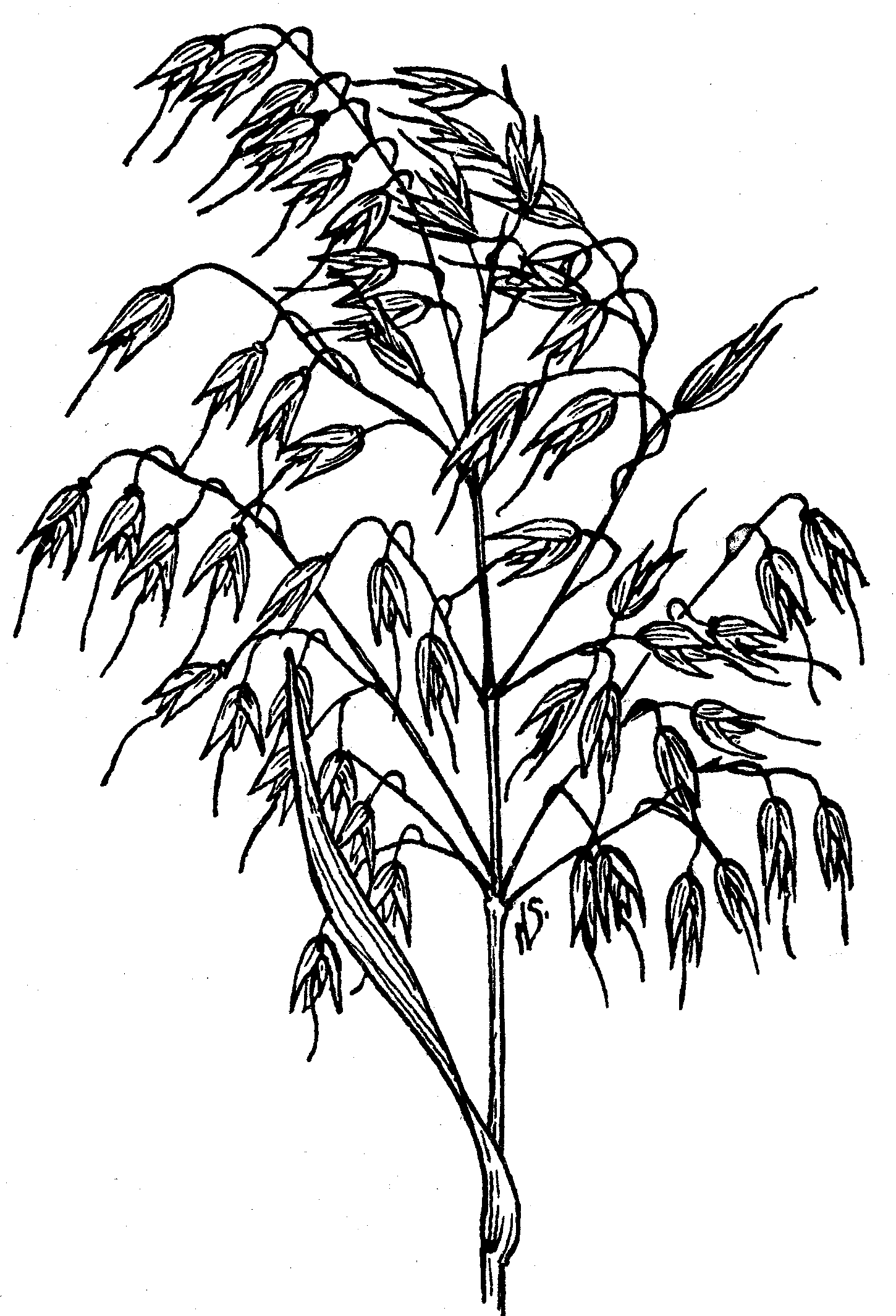 Oat Meal Coloring Related Keywords Oat Meal Coloring