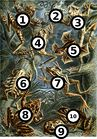 Haeckel frogs fill in the blank.jpg