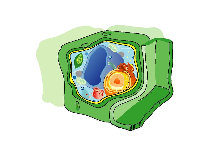 File Plant cell structure pdfno text smallpdf  The Work