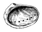 Abalone 002.png