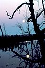 Moon Reflection on Lake.jpg
