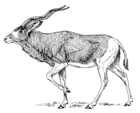 Addax 001.png